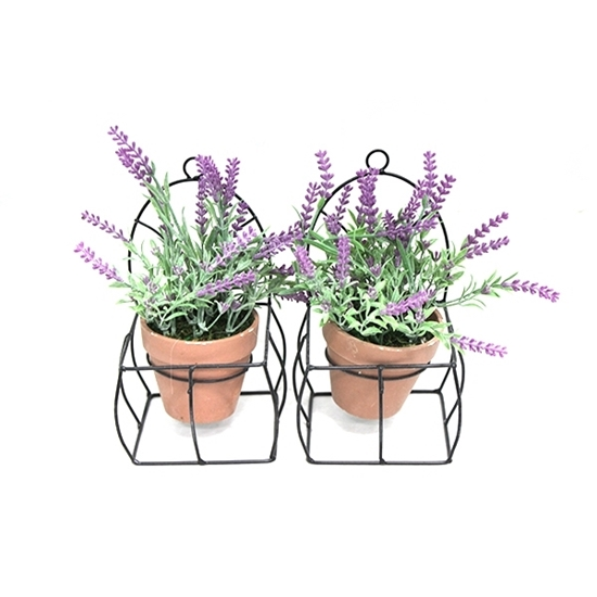 Picture of Lavender Plant in Pot - 23 x 12 x 10 Cm